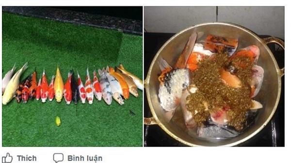 Chàng trai Đà Nẵng đem cá Koi đắt tiền đi kho tương khiến cộng đồng mạng ngơ ngác
