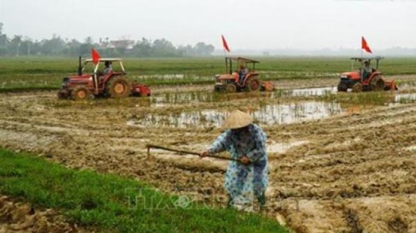Nông dân Quảng Trị 'chạy nước rút' cho kịp mùa vụ