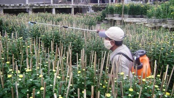 Làng hoa An Lạc thành phố Đông Hà hối hả vào vụ hoa Tết