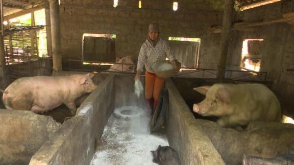 Cam Lộ: Công bố bệnh Dịch tả lợn Châu Phi tại xã Cam Nghĩa