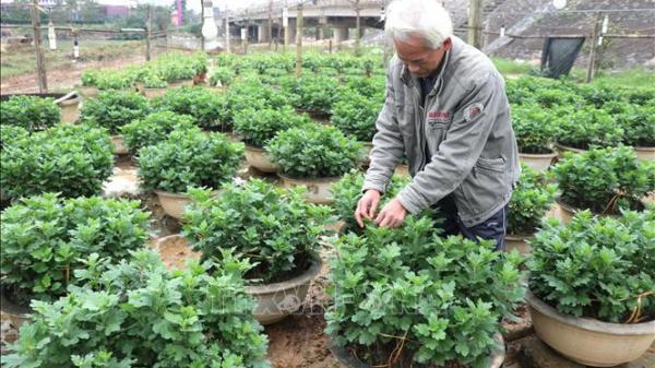 Nông dân vùng lũ Quảng Trị vượt khó sản xuất vụ Tết