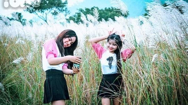 Các cô gái Đà Nẵng 'ngụp lặn' pose ảnh ở cánh đồng cỏ lau