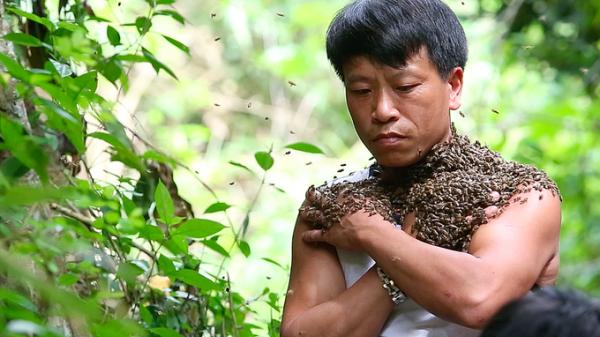 'Dị nhân' Điện Biên thu phục cả ngàn con ong rừng