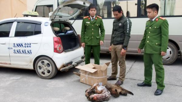 Bắt giữ đối tượng vận chuyển 3 cá thể báo gấm từ Điện Biên về Hà Nội