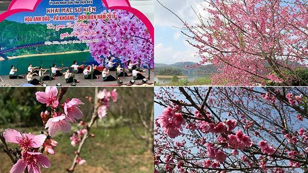 Lễ hội hoa anh đào Nhật Bản lần đầu tiên tại Điện Biên, người dân sững sờ với cả rừng hoa đào nở rộ đẹp như tiên cảnh