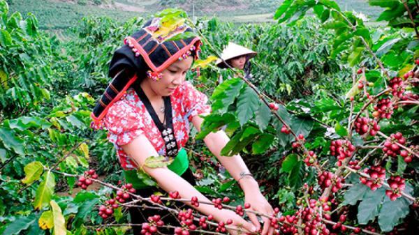 Phụ nữ dân tộc thiểu số Điện Biên, Sơn La được hỗ trợ 53 tỷ đồng trong dự án của tổ chức CARE
