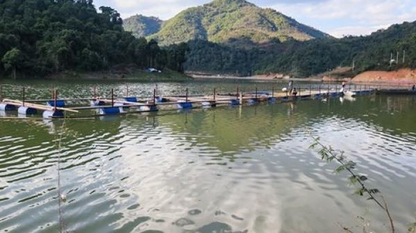 Di chuyển khẩn cấp hệ thống lồng cá sau sự cố vỡ bể chứa chất thải tại Điện Biên