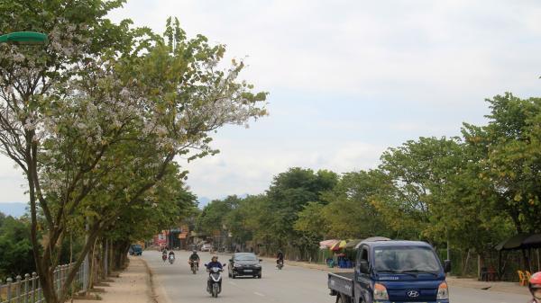 Về Điện Biên đi thôi... Hoa ban đã bắt đầu phủ trắng núi rừng rồi