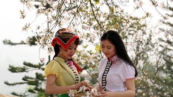Chùm ảnh: Hoa ban Điện Biên vào hội