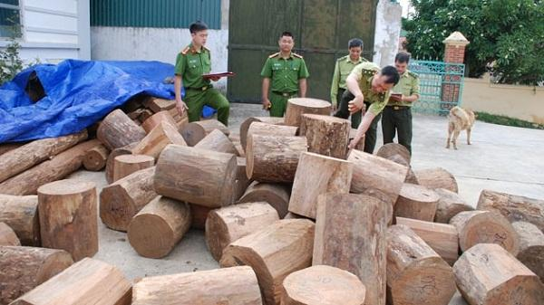 Điều tra nhiều vụ vận chuyển gỗ quý tại Điện Biên