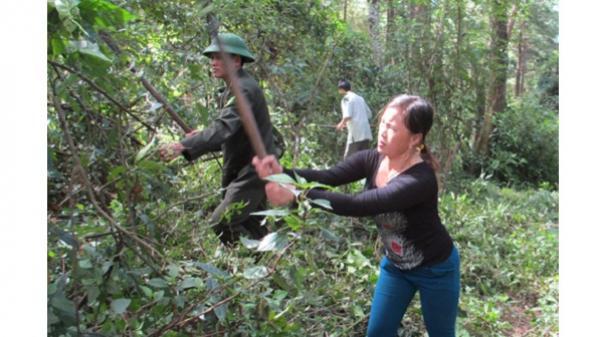 Tủa Chùa - Điện Biên: Xử lý 23 vụ vi phạm hành chính về quản lý và bảo vệ rừng