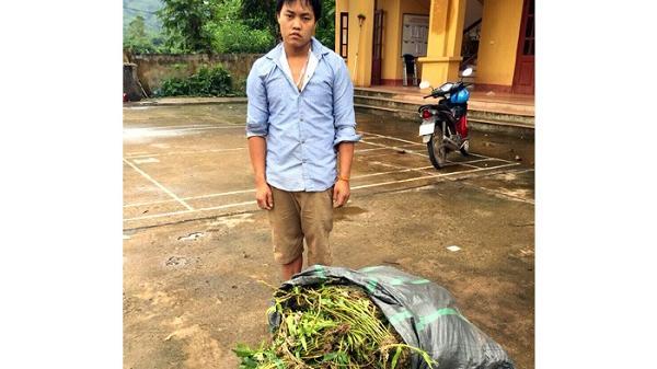 Điện Biên: Phát hiện, thu giữ 85kg phong lan rừng