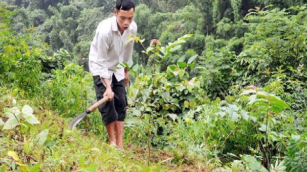 3.021 dự án đang 'đe dọa' 122.000 diện tích rừng