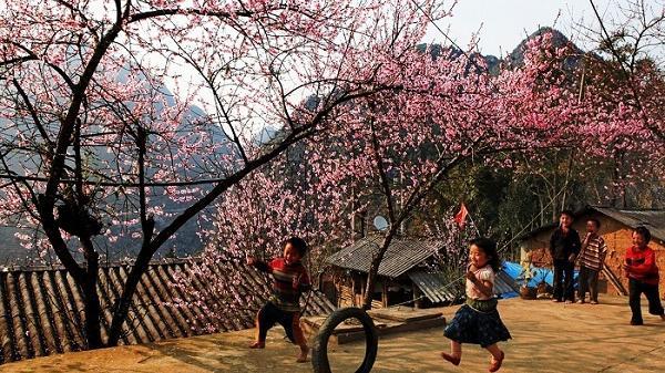 Mê mẩn ngắm hoa Tớ Dày nở bừng sáng núi đồi Điện Biên