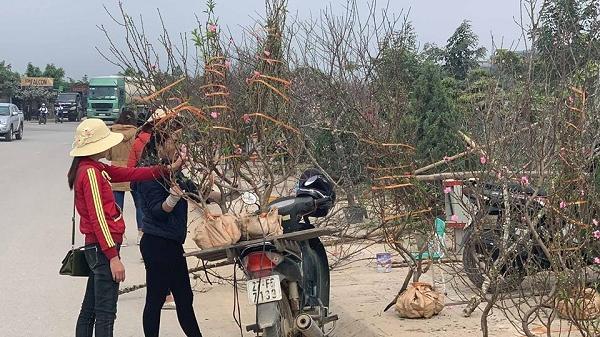 Điện Biên: Nhộn nhịp thị trường hoa, cây cảnh trước tết