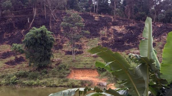 Hơn 6.500 m2 rừng đặc dụng bị chặt phá tại Điện Biên
