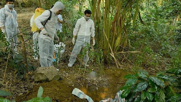 Điện Biên: Tiêu hủy hơn 4.500 con lợn với trọng lượng gần 170 tấn do d.ịch tả lợn châu phi