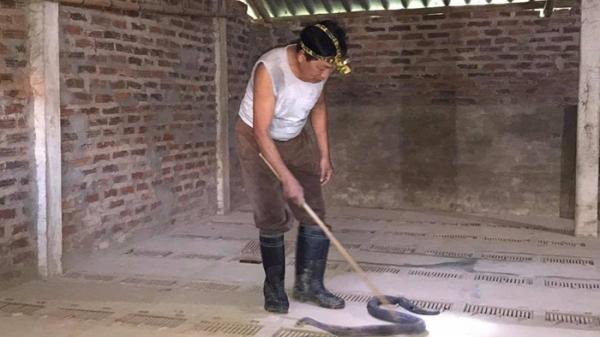 Điện Biên: Trở thành triệu phú nhờ...rắn hổ mang