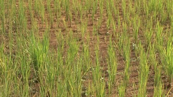 Điện Biên: Phân bổ 15 tỷ đồng hỗ trợ khắc phục hậu quả hạn hán vụ Đông Xuân
