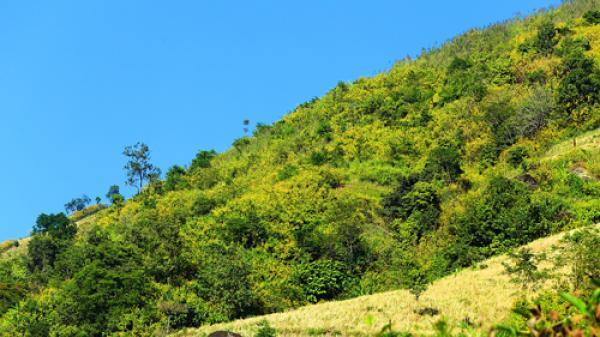Ngỡ ngàng vẻ đẹp rực rỡ của mùa hoa dã quỳ Điện Biên