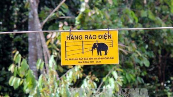 Đồng Nai: Đàn voi rừng phá hoại hoa màu, thiệt hại hàng trăm triệu đồng