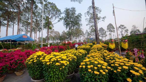 Ngắm CHỢ HOA TẾT rực rỡ sắc hương ở Biên Hòa