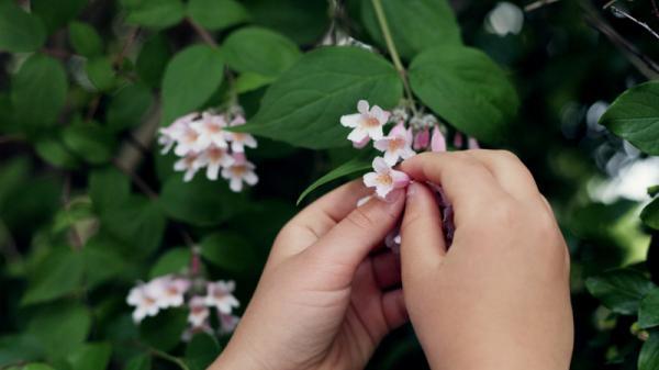 Đồng Nai: Phạt tiền TRIỆU khi bẻ cành, nhổ cây