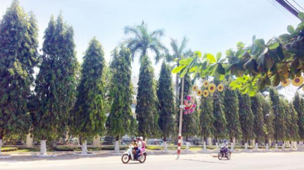 Biên Hòa đề xuất thay mới cây xanh trên đường Hà Huy Giáp