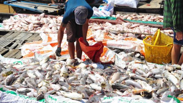 Hé lộ nguyên nhân 1.500 tấn cá chết trắng sông ở Đồng Nai
