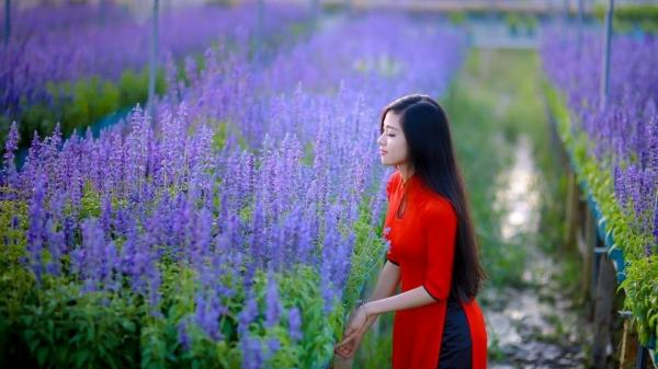 Lạc bước vào vườn hoa xác pháo đẹp ngỡ ngàng ở Biên Hòa