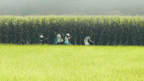"""Mê mẩn ngắm bộ ảnh """"Trốn trẻ đồng xanh"""" ở vườn Quốc gia Nam Cát Tiên hoang sơ"""
