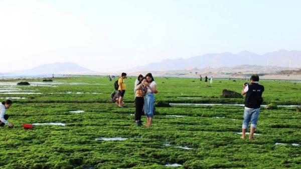 """Mê mải """"sống ảo"""" trên khoảng xanh bạt ngàn rong biển ở Ninh Thuận"""