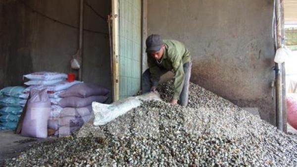 Bình Phước: Cảnh giác trước tội phạm, thủ đoạn ép giá thu mua hạt điều tươi