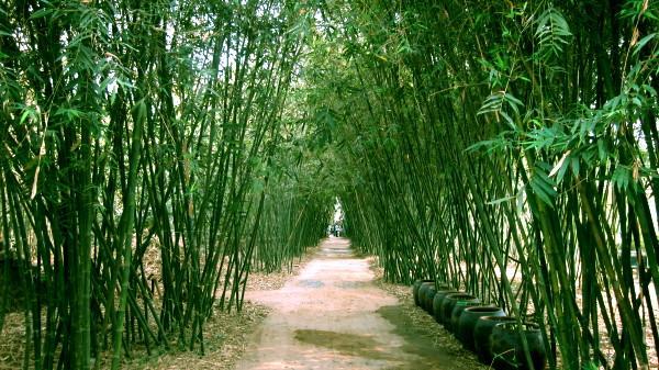 Độc đáo bộ sưu tập tre Việt tại tỉnh Đồng Tháp
