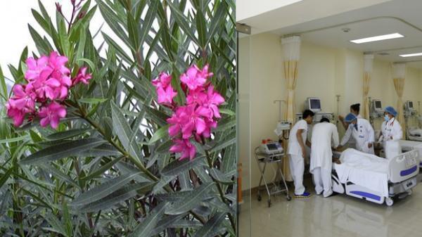 Cận cảnh 12 loài hoa đẹp có chất kịch độc chết người