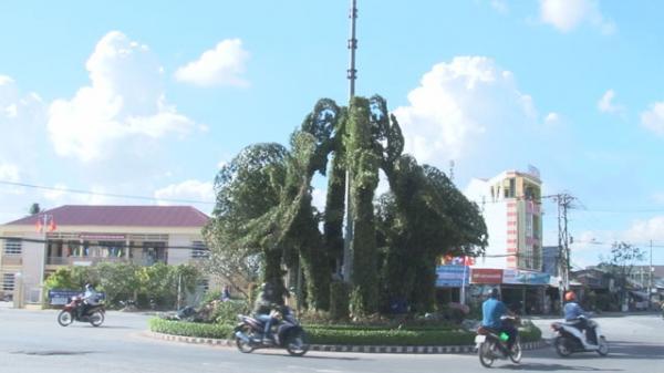 Đồng Tháp: Người đi đường thích thú với cụm bông hồng bằng cây xanh