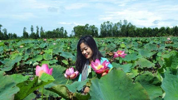 'Tạm trốn' Sài Gòn, ghé lại Đồng Tháp Mười ngắm sen nở tuyệt đẹp