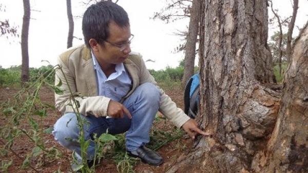 Gia Lai: Bắt ông Nguyễn Đức- Trưởng Ban quản lý rừng phòng hộ Bắc Biển Hồ