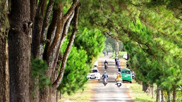 Con đường thôn với hàng thông cổ 100 tuổi đẹp ngất ngây ở Gia Lai