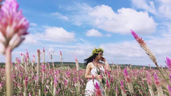 Gia Lai có một mùa cỏ nến đẹp đến lịm tim, níu giữ bất cứ bước chân người nào!