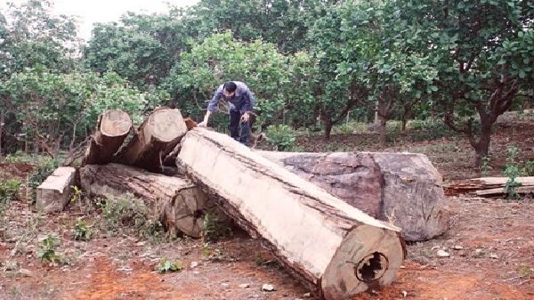 Gia Lai phát hiện số lượng lớn gỗ lậu dưới lòng hồ thủy điện Sê San 3A