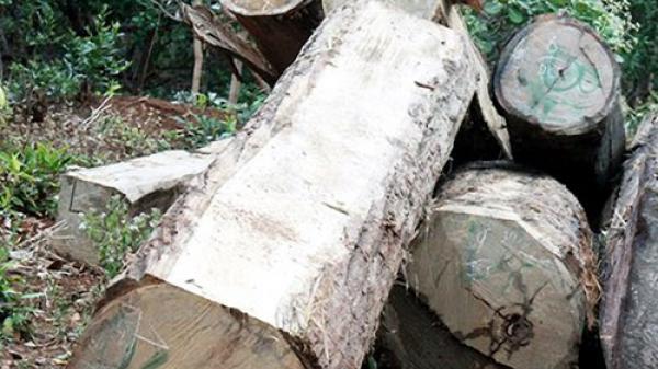Gia Lai: Trục vớt hơn 10m3 gỗ được lâm tặc cất giấu dưới lòng hồ thủy điện Sê San