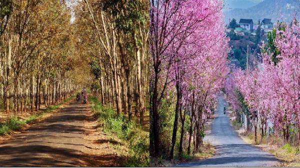 Gia Lai nằm trong những điểm đến đẹp nhất Việt Nam để du lịch mùa xuân