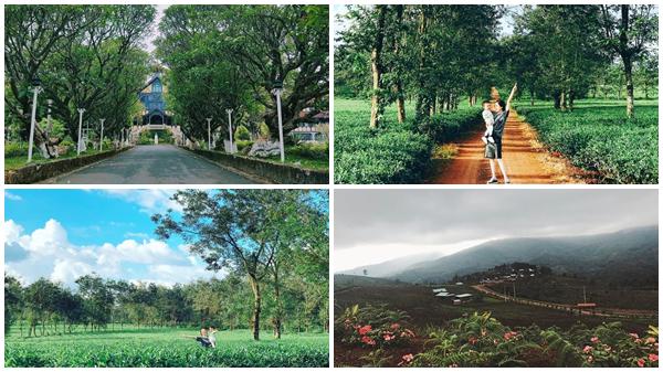 Lạc lối ở những con đường đẹp như phim Hàn ngay giữa lòng Tây Nguyên hùng vĩ