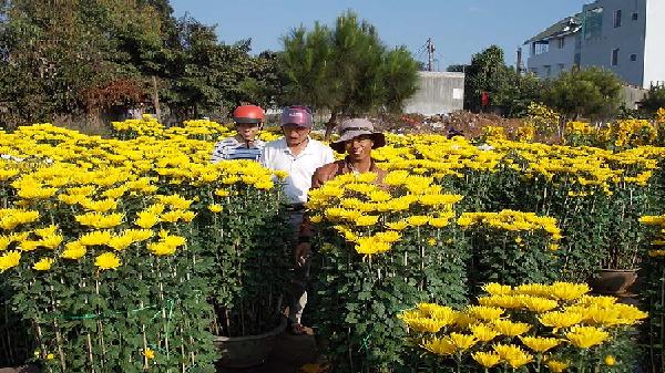 Thành phố Pleiku tích cực chuẩn bị phục vụ chợ hoa Tết