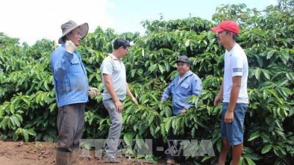 """Gia Lai: Nông dân cần cảnh giác trước """"công ty ma, doanh nghiệp ảo"""""""