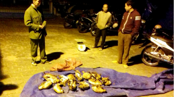 Kông Chro phát hiện, bắt giữ vụ vận chuyển động vật rừng trái phép