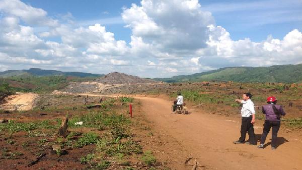 Gia Lai: Nhiều doanh nghiệp chây ỳ nộp tiền trồng rừng thay thế 