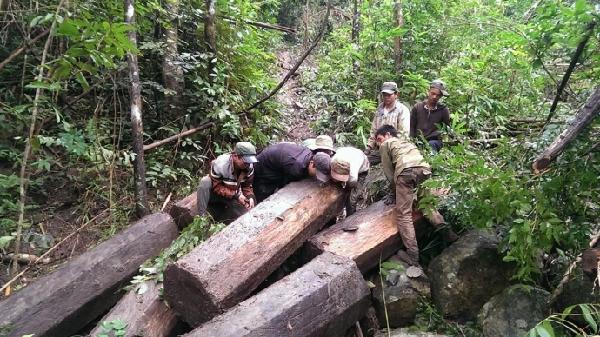 Gia Lai: Khoảng 40 lâm tặc táo tợn cướp tang vật phá rừng
