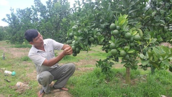 Gia Lai: Lão nông U50 thu nhập hơn 400 triệu đồng/năm nhờ vùng đất bỏ hoang